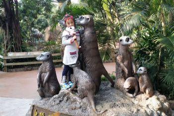福州到广州长隆野生动物园及大马戏之旅