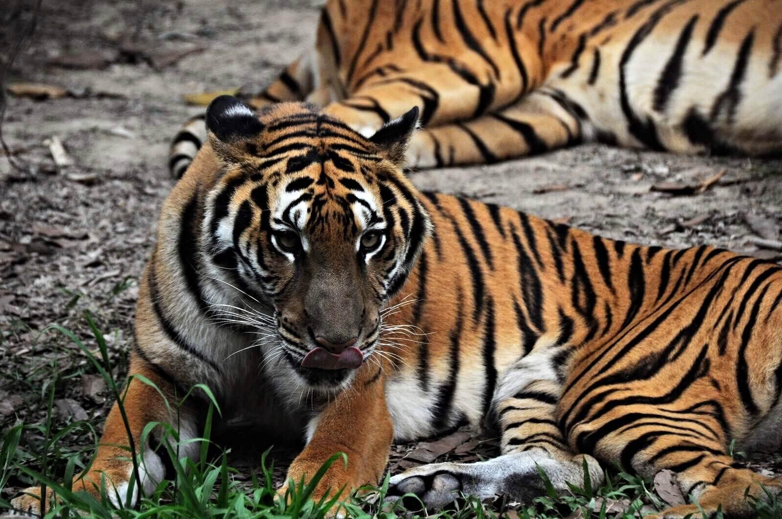 长隆野生动物世界 长隆野生动物世界