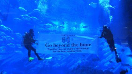 迪拜水族馆及水下动物园-6