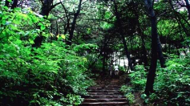 翠枫山自然风景区门票