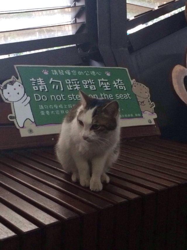 台湾如此小清新 - 高雄游记攻略【携程攻略】