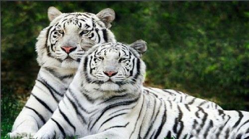 三峡森林野生动物世界