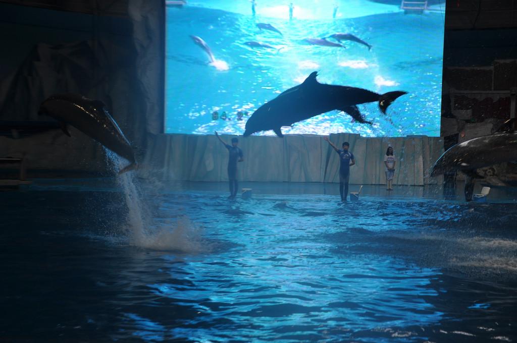 壁纸 海底 海底世界 海洋馆 水族馆 1024_680
