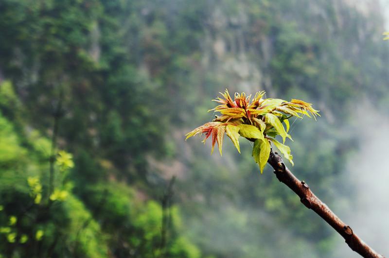 春天万物生长,一株春草含苞绽放