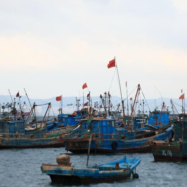 威海渔港 离市中心不远的一个渔港,去的时候是休渔期,停满了渔船.