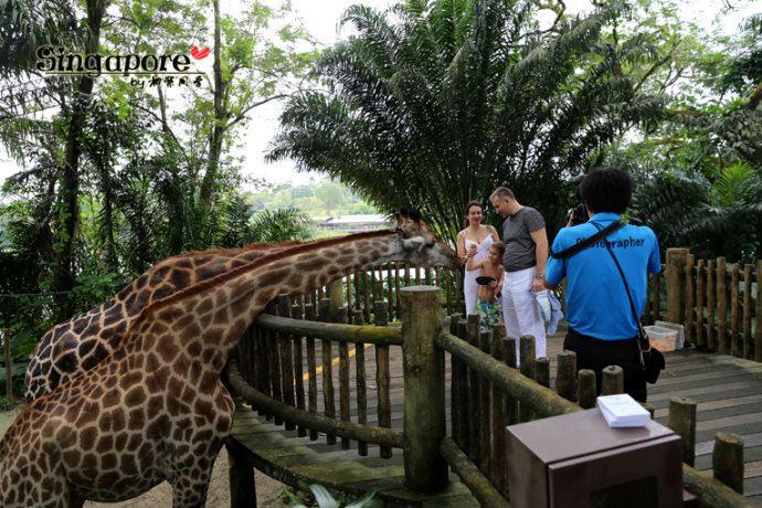 玩乐新加坡动物园singapore