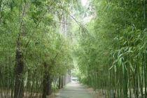 南京 魁北克/安吉中南百草园+动物世界+欢乐世界摩天轮一日游(南京出发)