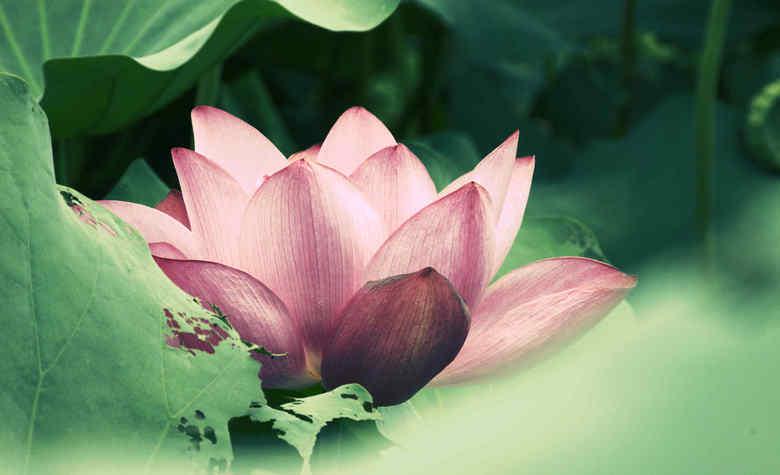 上海植物園    -3