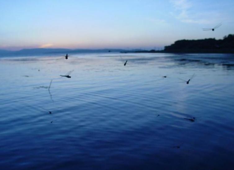 主要景点有海王顶国际灯塔,北方鸟岛,黑白石,龟石,银窝石林,城山城址