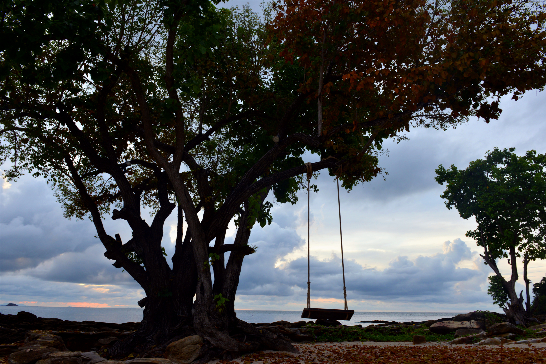 一颗大树和一个秋千.