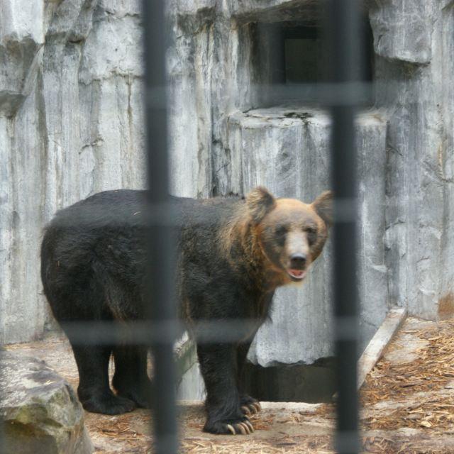 个人觉得,去过野生动物园和水族馆的人就不必特地去旭川动物园了,除了