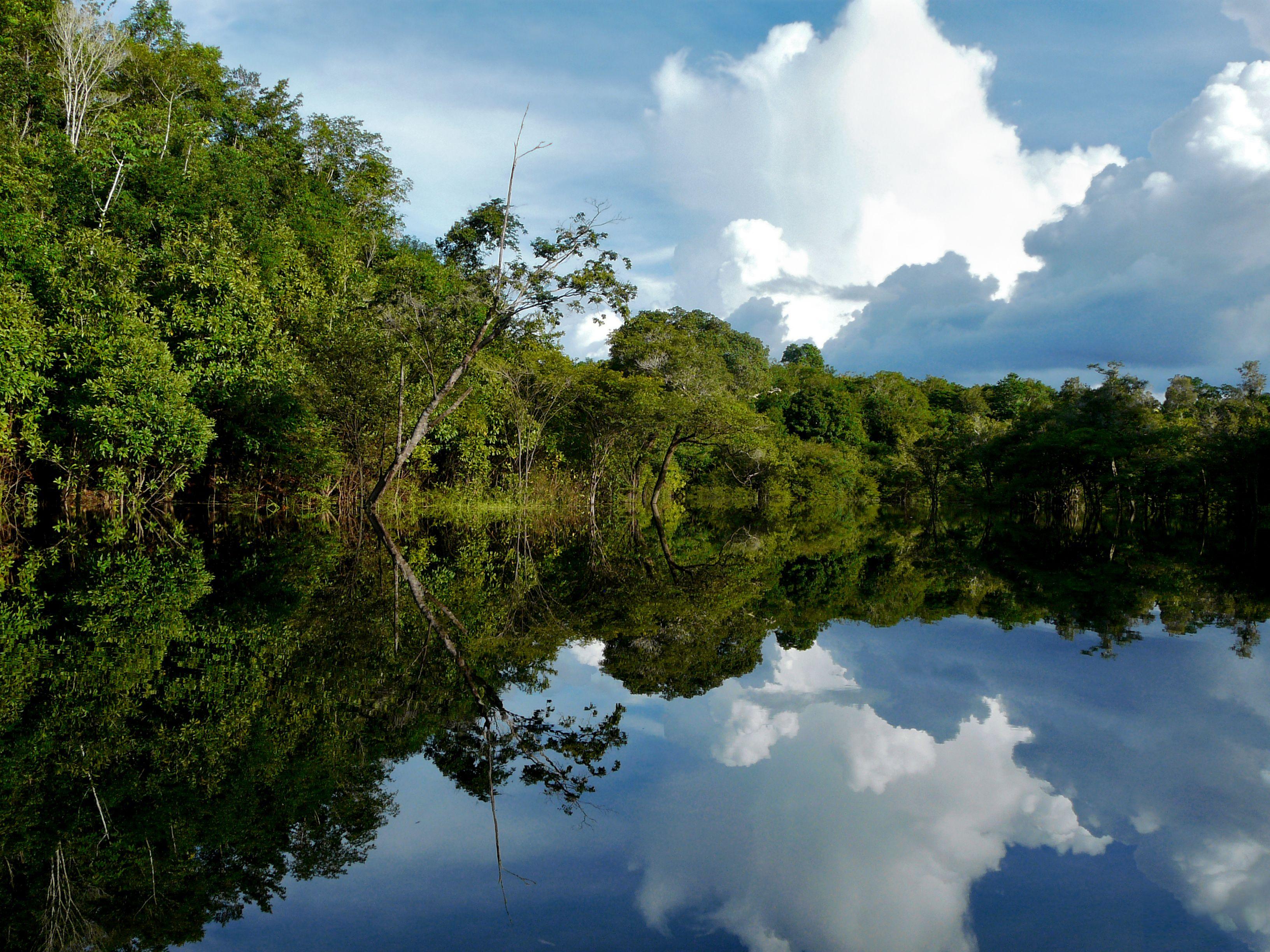 亚马逊热带雨林 奥卡万戈三角洲