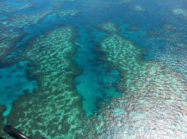 大自然海景动物