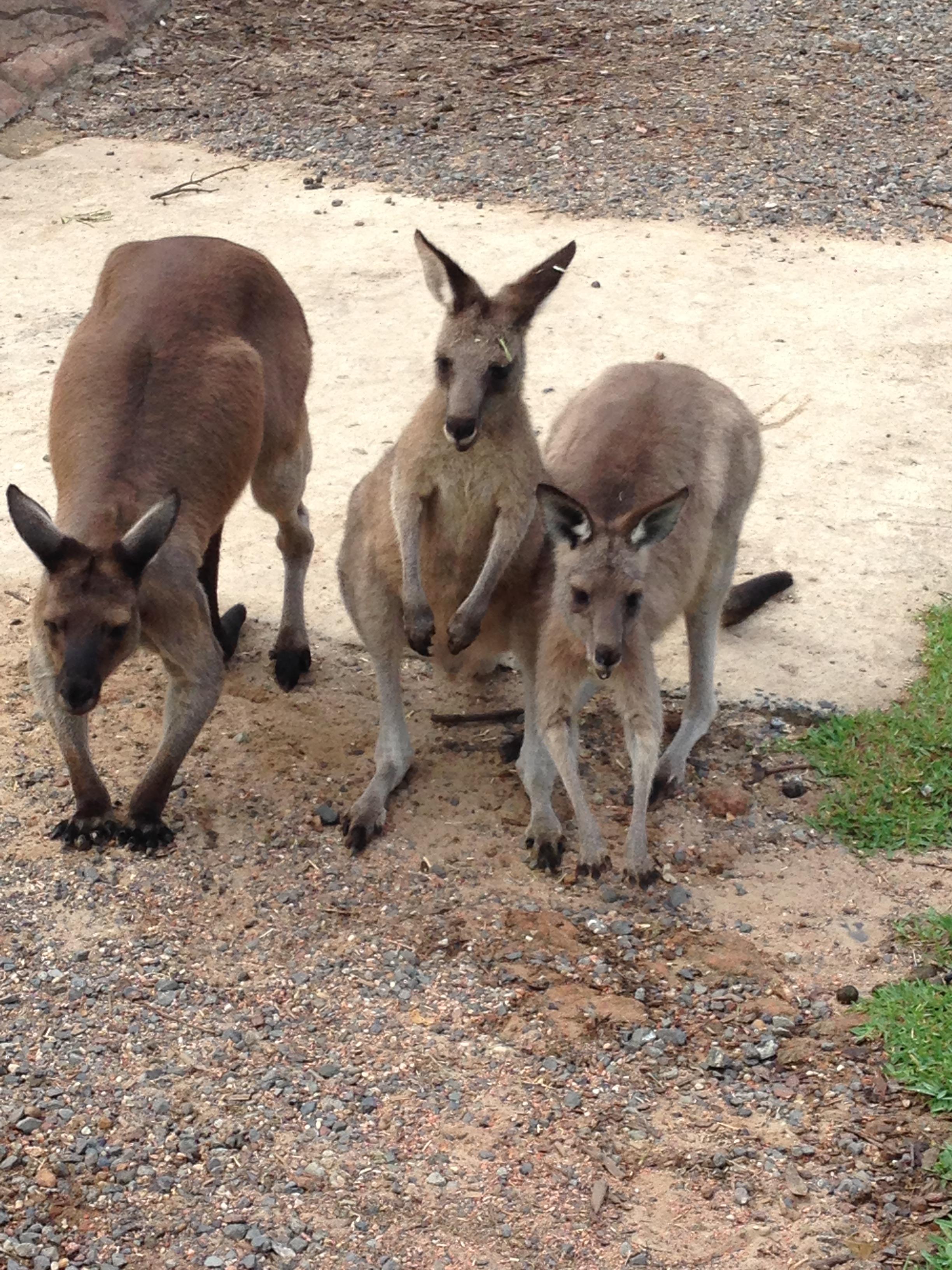 澳洲悉尼堪培拉墨尔本黄金海岸凯恩斯当地跟团2014年