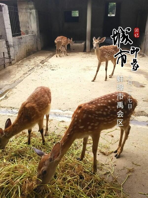 张公山动物园里的小鹿