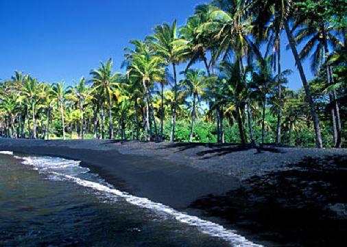 沙滩边上有大量的椰子树,或许还会发现巨大的夏威夷绿海龟在沙滩上晒