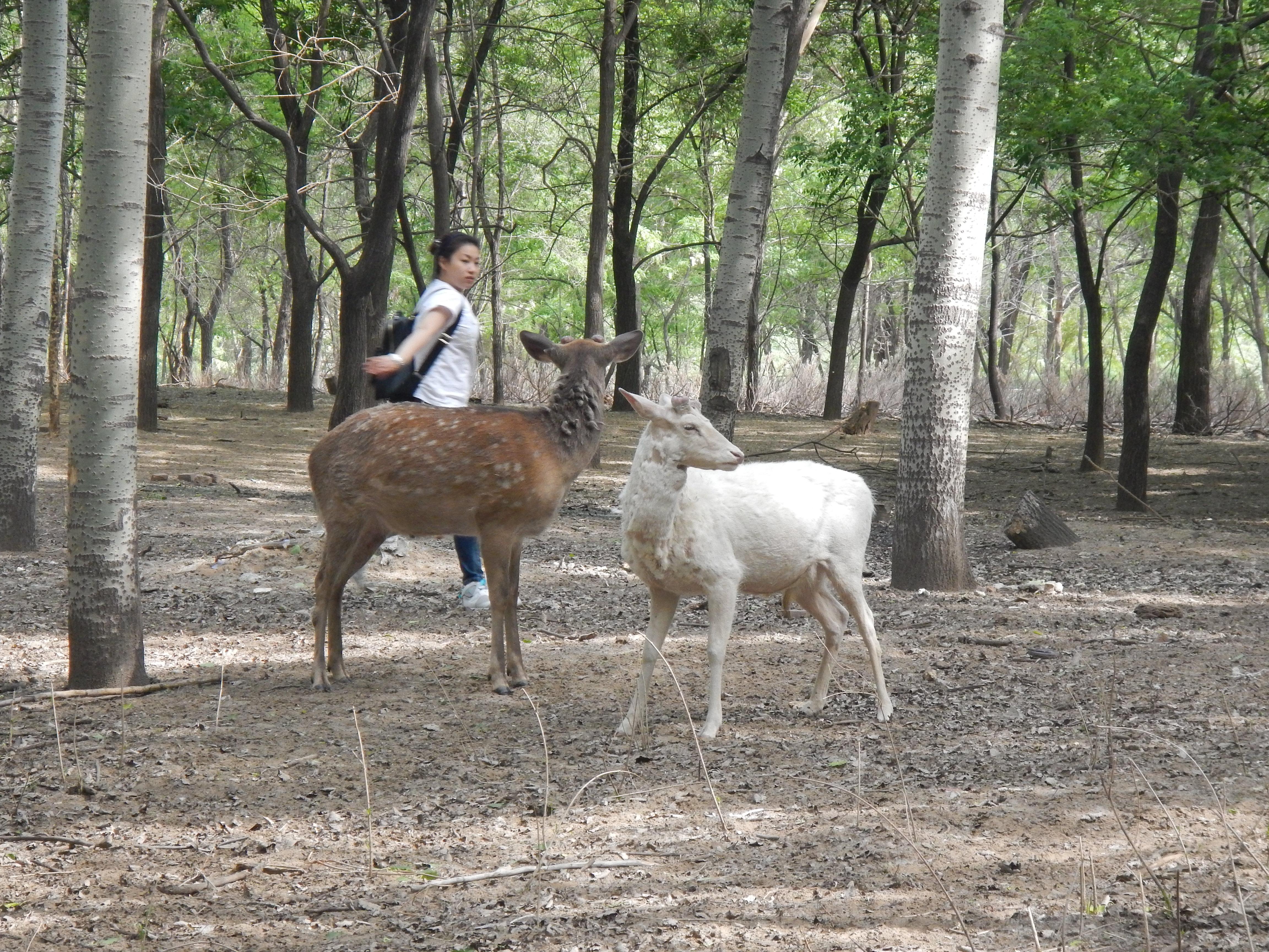 北京野生动物园 北京野生动物园 自己开着电瓶车悠悠闲闲,走走停停.