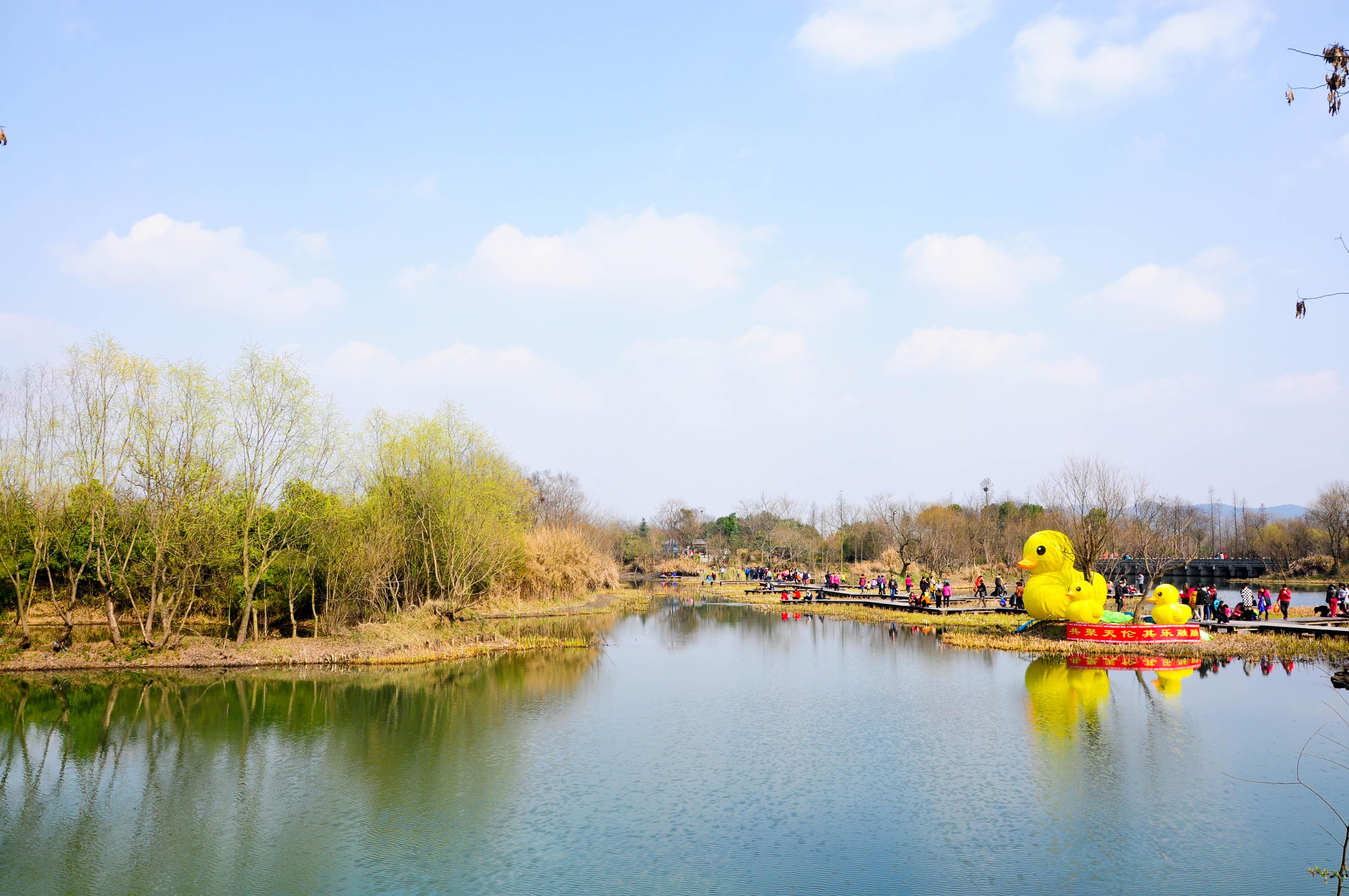 小黄鸭,黄色的画面很是绚丽!