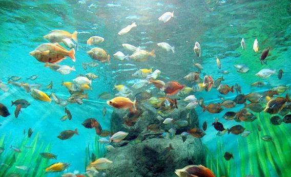 壁纸 海底 海底世界 海洋馆 水族馆 568_346