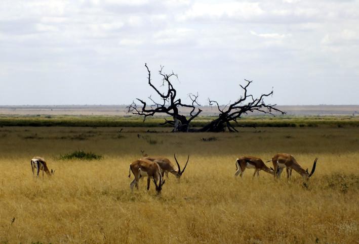 东非动物迁徙季
