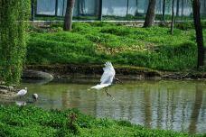 朱鹮自然保护区-洋县-风景美如花