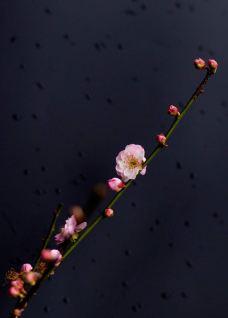 梅园-无锡