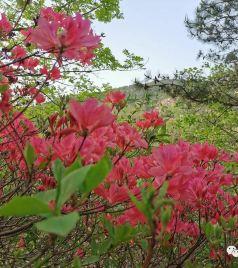 五莲游记图文-采摘-看美景-享美食-五一游松月湖旅游度假区