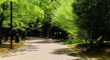 代代木公园-东京-暝逝