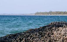 维桑海滩-仰光-轻轻的一个蚊