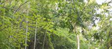 云阳国家森林公园-茶陵-gz当地向导伊妹儿