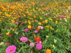 黄山鲁森林公园-广州-翼儿爱自由