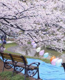 代代木公园-东京-小凌60