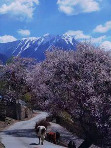 南迦巴瓦峰-米林-D23****498