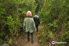 Parque Nacional Alerce Costero-拉乌尼翁