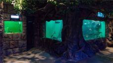 淡水生物馆-青岛-AIian