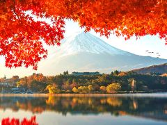5日京都+大阪·岚山小火车+富士红叶+和果子制作