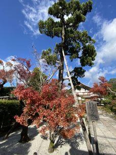 天龙寺-京都-过年不回家
