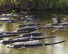 鳄鱼公园-迈阿密-尊敬的会员