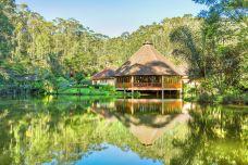 昂达西贝国家森林保护区-塔拿那利佛-尊敬的会员