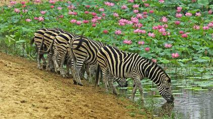 秦皇岛野生动物园 (5)