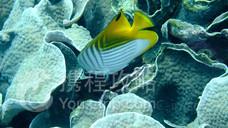 丽水水族馆(海洋星城)