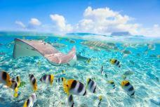 波拉波拉岛环礁湖水族馆-波拉波拉岛-加藤颜正Kato