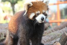 小熊猫展区-南通-AIian