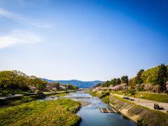 只为樱花而来,日本关西3城寻樱6日游