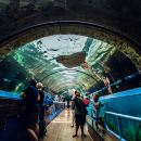 SEA LIFE Sydney Aquarium Ticket