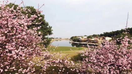 梁子湖高尔夫09