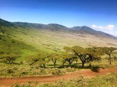 内罗毕国家公园-内罗毕-M48****413