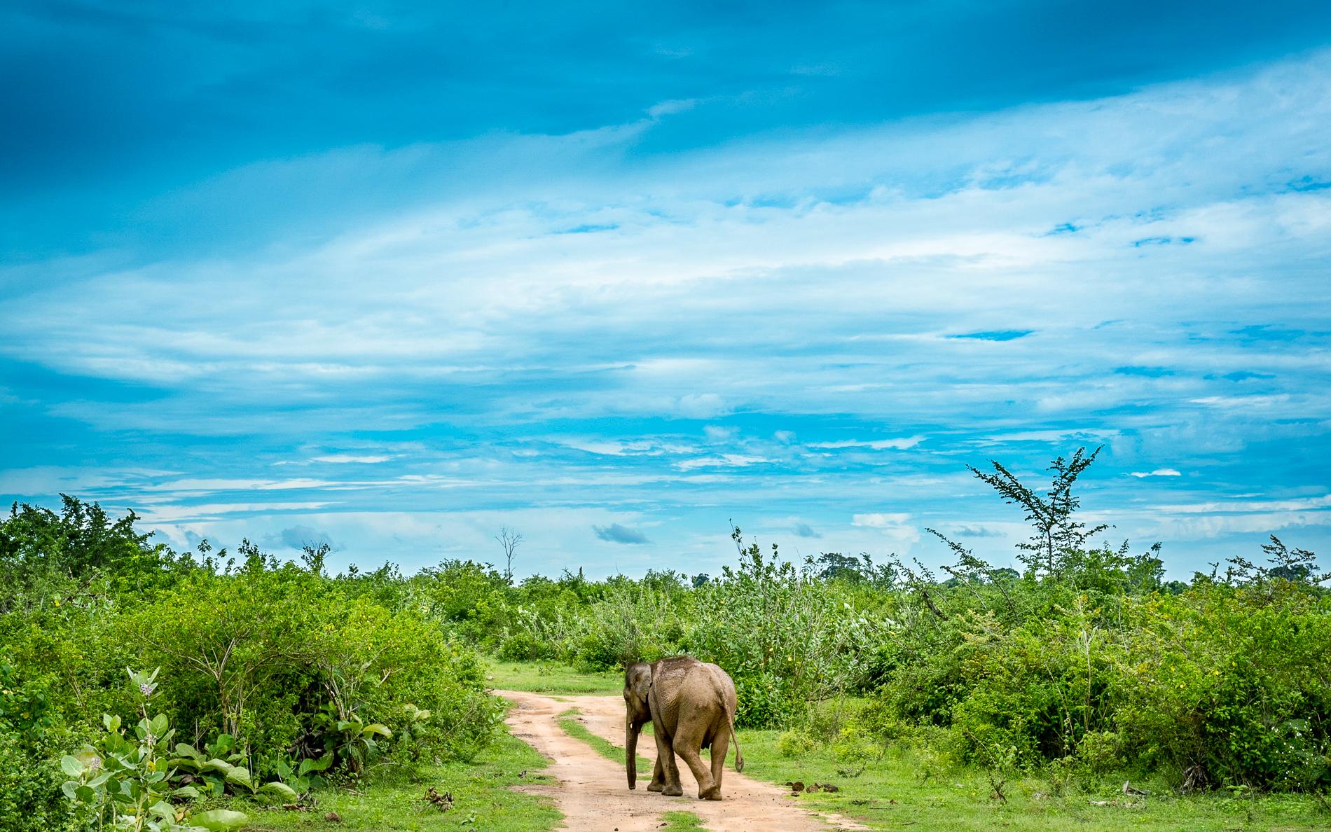 Udawalawe National Park Private Half Day Safari in Sri Lanka