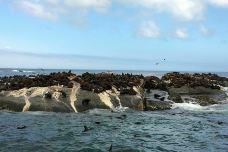 海豹岛-开普敦-juki235
