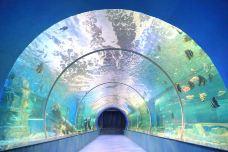 娄底海立方海洋公园-娄底-AIian